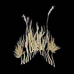 Recipe: Desert Grass