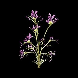 Recipe: Plumthistle Plant (Perfect)