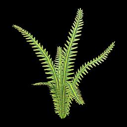 Recipe: Jungle Fern (Medium) 1