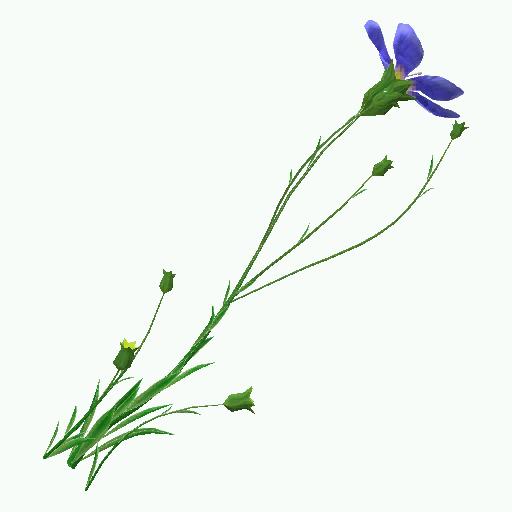 Recipe: Flax Plant