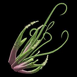Recipe: Jute Plant