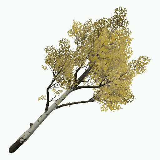 Recipe: Deciduous Birch Tree (Medium) 1