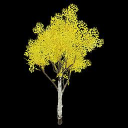 Recipe: Deciduous Birch Tree (Medium) 2