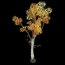 Recipe: Deciduous Birch Sapling 1
