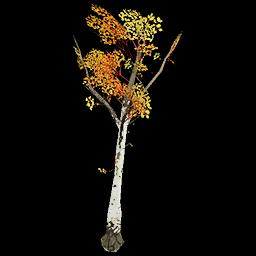 Recipe: Deciduous Birch Sapling 3